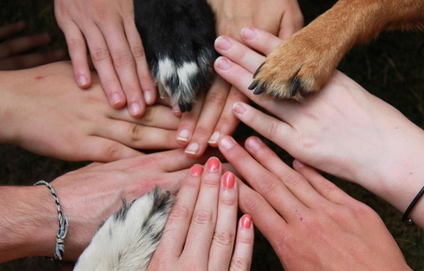 What Stands Behind Love for Animals dating-singles-meetville-matchmaking